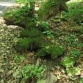 Ciekawy konar drzewa porośniety mchem