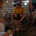 Ja zdużym żółwiem