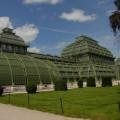 Palmiarnia wSchonbrunn