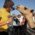 Wielbłąd wyciągnął butelkę zmojejkieszeni