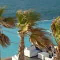 Palmy rozkołysane wiatrem
